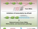 Pinto et al Mol Cell